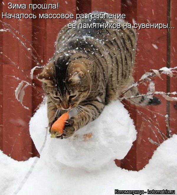 Котоматрица: Зима прошла! Началось массовое разграбление ее памятников на сувениры...