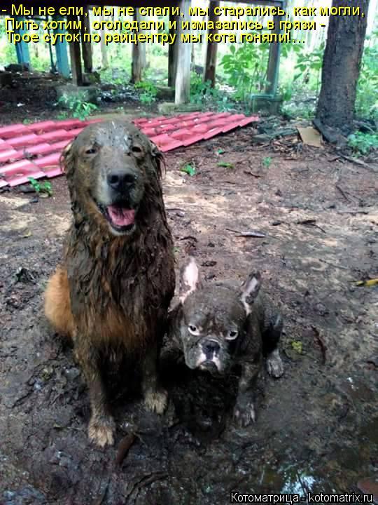 Котоматрица: - Мы не ели, мы не спали, мы старались, как могли, Пить хотим, оголодали и измазались в грязи - Трое суток по райцентру мы кота гоняли!...