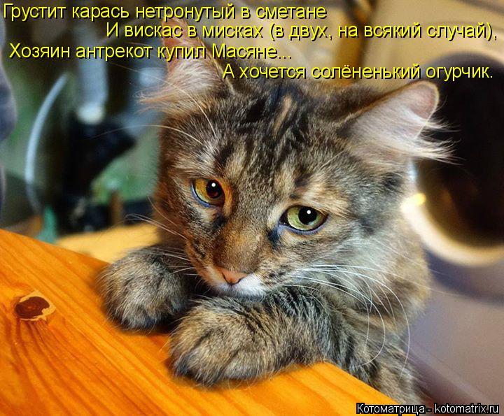 Котоматрица: Грустит карась нетронутый в сметане И вискас в мисках (в двух, на всякий случай), Хозяин антрекот купил Масяне... А хочется солёненький огурч