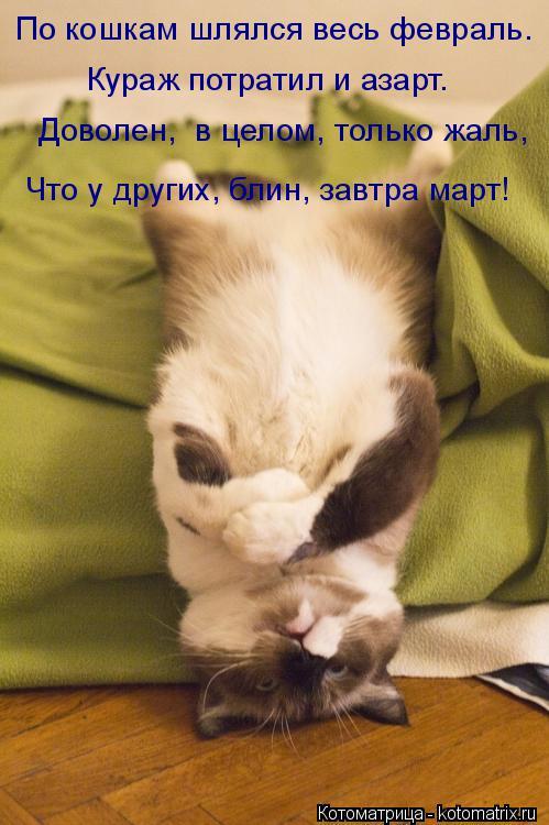 Котоматрица: По кошкам шлялся весь февраль. Кураж потратил и азарт. Доволен,  в целом, только жаль,  Что у других, блин, завтра март!