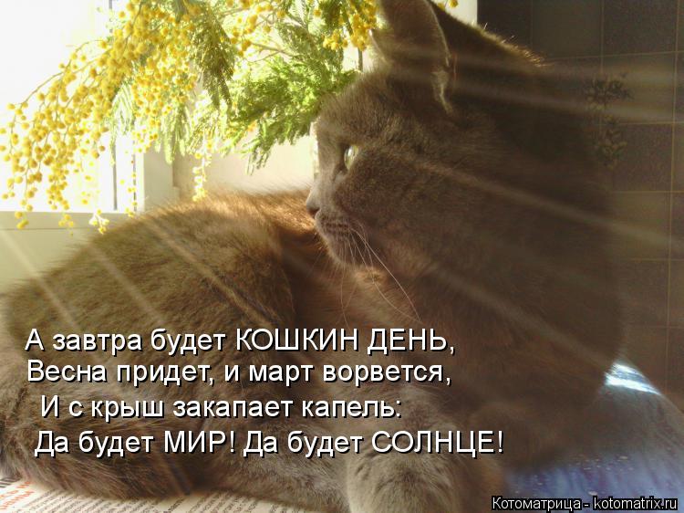 Котоматрица: А завтра будет КОШКИН ДЕНЬ, Весна придет, и март ворвется, И с крыш закапает капель: Да будет МИР! Да будет СОЛНЦЕ!