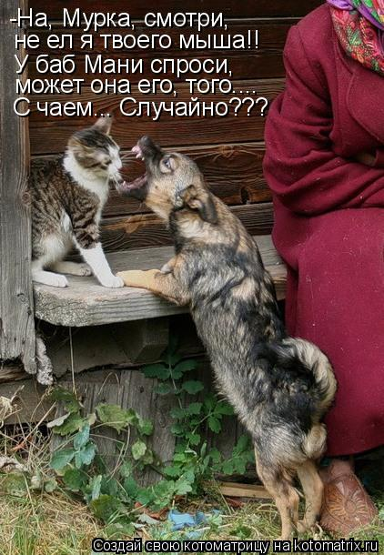 Котоматрица: -На, Мурка, смотри, не ел я твоего мыша!! У баб Мани спроси, может она его, того.... С чаем... Случайно???