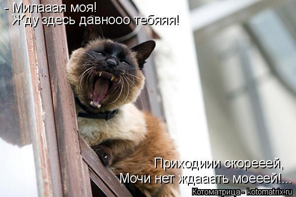 Котоматрица: - Милааая моя!  Жду здесь давнооо тебяяя! Приходиии скорееей, Мочи нет ждааать моееей!...