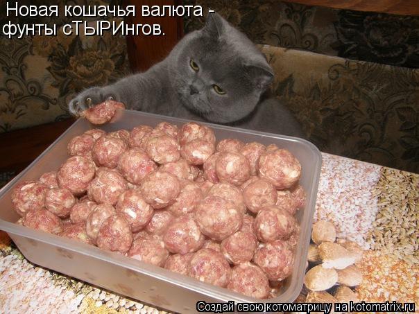 Котоматрица: Новая кошачья валюта - фунты сТЫРИнгов.