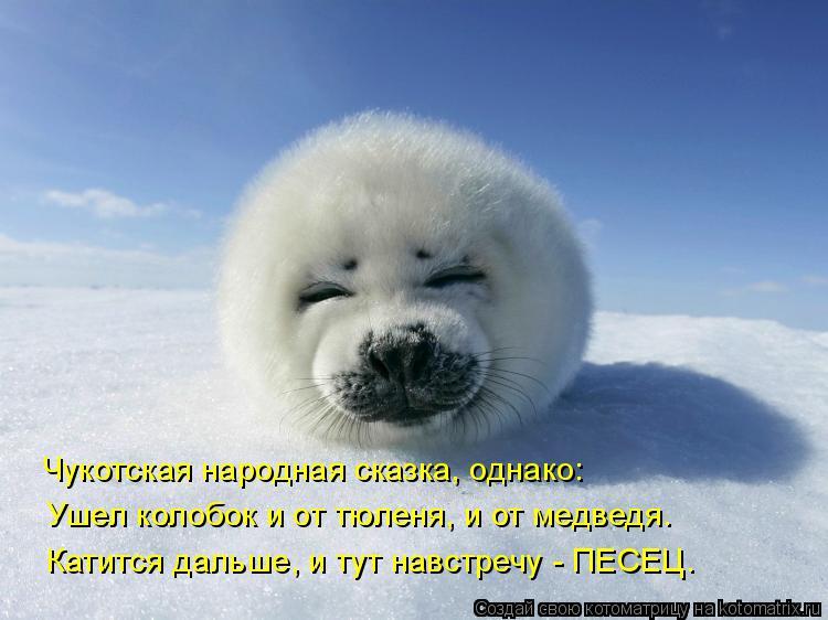 Котоматрица: Чукотская народная сказка, однако: Ушел колобок и от тюленя, и от медведя. Катится дальше, и тут навстречу - ПЕСЕЦ.