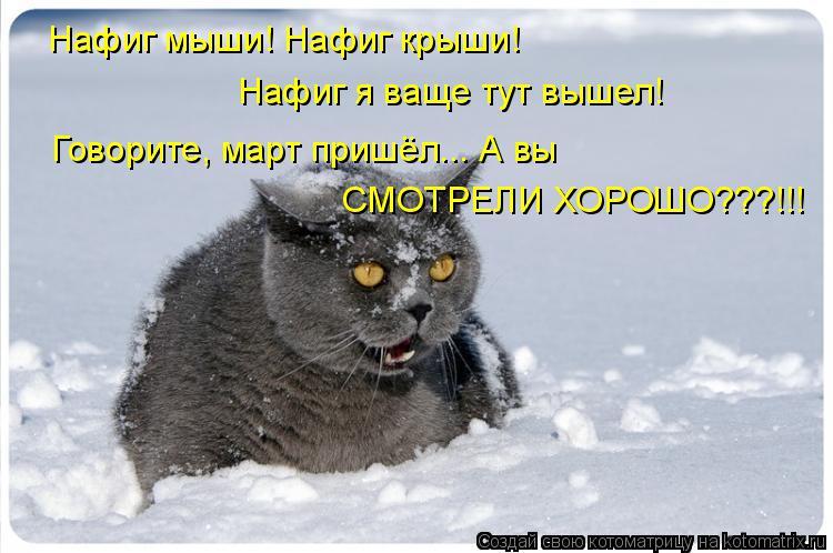 Котоматрица: Нафиг мыши! Нафиг крыши! Нафиг я ваще тут вышел! Говорите, март пришёл... А вы СМОТРЕЛИ ХОРОШО???!!!