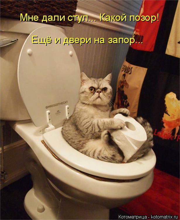 Котоматрица: Мне дали стул... Какой позор!  Ещё и двери на запор...