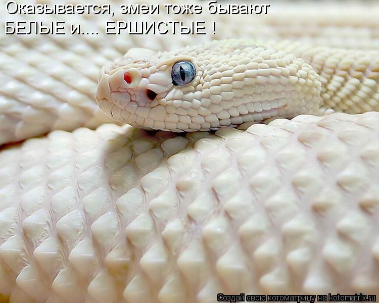 Котоматрица: Оказывается, змеи тоже бывают БЕЛЫЕ и.... ЕРШИСТЫЕ !