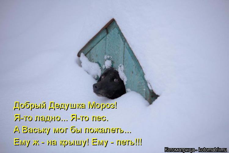 Котоматрица: Добрый Дедушка Мороз! Я-то ладно... Я-то пес. А Ваську мог бы пожалеть... Ему ж - на крышу! Ему - петь!!!