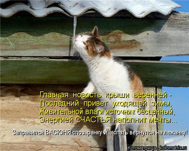 Котоматрица: Главная  новость  крыши  весенней - Последний  привет  уходящей  зимы, Живительной влаги источник бесценный, Энергией СЧАСТЬЯ наполнит мечты