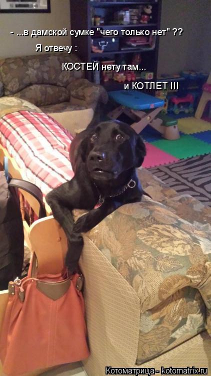 """Котоматрица: - ...в дамской сумке """"чего только нет"""" ?? Я отвечу : КОСТЕЙ нету там... и КОТЛЕТ !!!"""