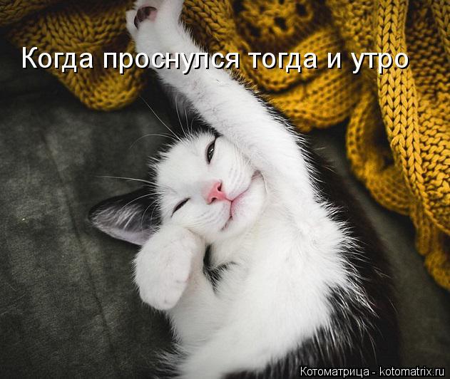 Котоматрица: Когда проснулся тогда и утро