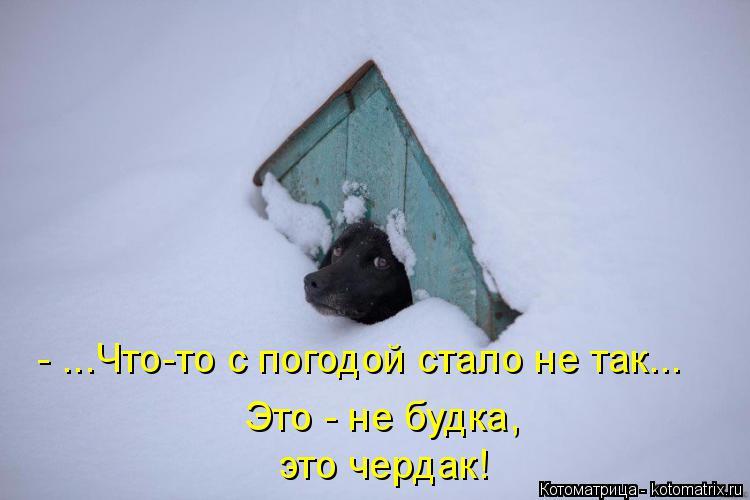 Котоматрица: это чердак! Это - не будка, - ...Что-то с погодой стало не так...