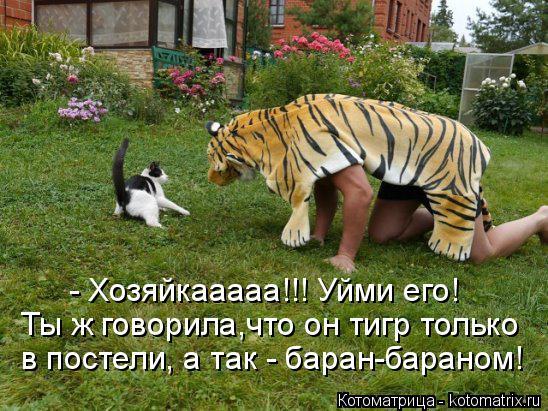 Котоматрица: - Хозяйкааааа!!! Уйми его! Ты ж говорила,что он тигр только  в постели, а так - баран-бараном!
