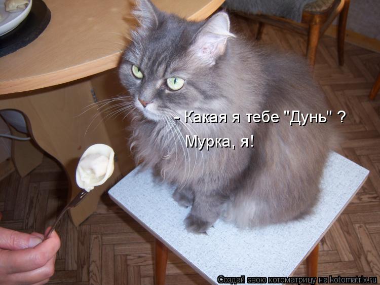 """Котоматрица: - Какая я тебе """"Дунь"""" ? Мурка, я!"""