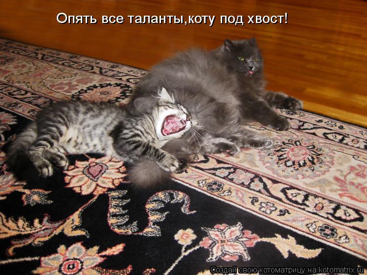 Котоматрица: Опять все таланты,коту под хвост!