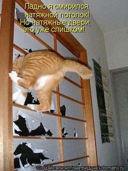 Котоматрица: Ладно я смирился, натяжной потолок! Но натяжные двери, это уже слишком!