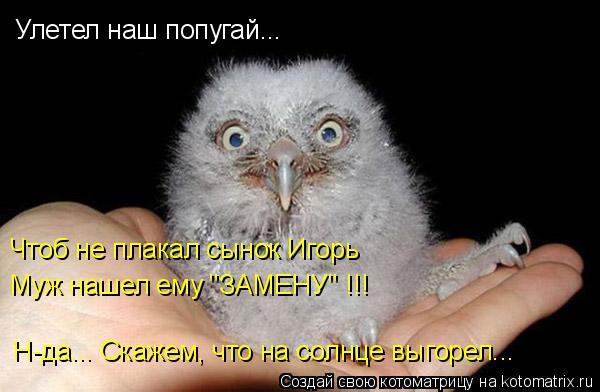 """Котоматрица: Улетел наш попугай... Чтоб не плакал сынок Игорь Муж нашел ему """"ЗАМЕНУ"""" !!! Н-да... Скажем, что на солнце выгорел..."""