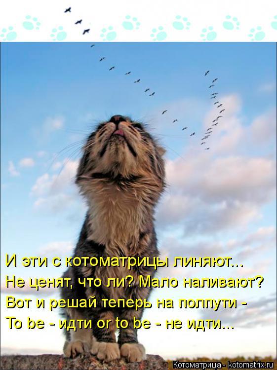 Котоматрица: И эти с котоматрицы линяют... Не ценят, что ли? Мало наливают? Вот и решай теперь на полпути - To be - идти or to be - не идти...