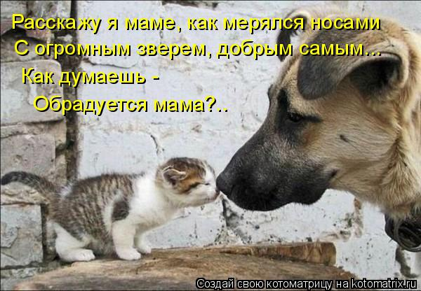 Котоматрица: Расскажу я маме, как мерялся носами С огромным зверем, добрым самым... Как думаешь -  Обрадуется мама?..