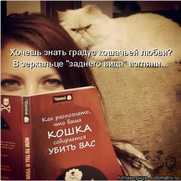 """Котоматрица: Хочешь знать градус кошачьей любви? В зеркальце """"заднего вида"""" взгляни..."""