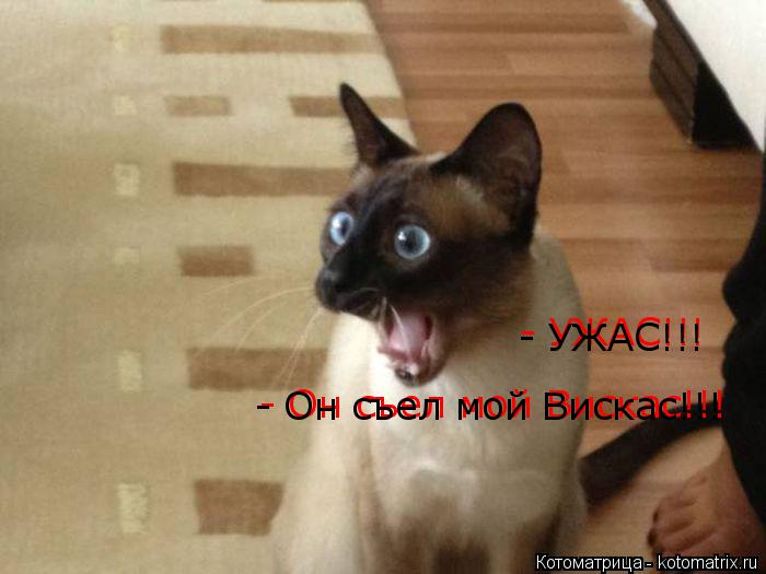 Котоматрица: - УЖАС!!!  - УЖАС!!! - Он съел мой Вискас!!! - Он съел мой Вискас!!!