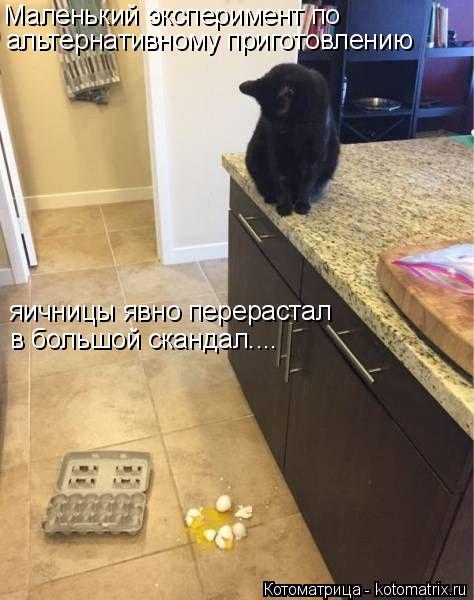 Котоматрица: Маленький эксперимент по  альтернативному приготовлению  яичницы явно перерастал в большой скандал....