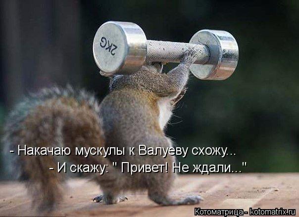 "Котоматрица: - Накачаю мускулы к Валуеву схожу... - И скажу: "" Привет! Не ждали..."""