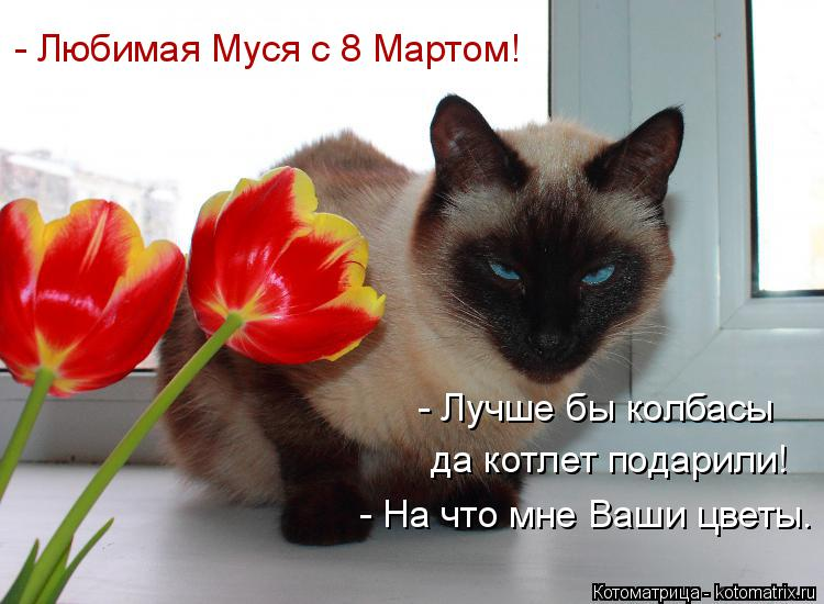 Котоматрица: - Любимая Муся с 8 Мартом! - Лучше бы колбасы  да котлет подарили! - На что мне Ваши цветы.