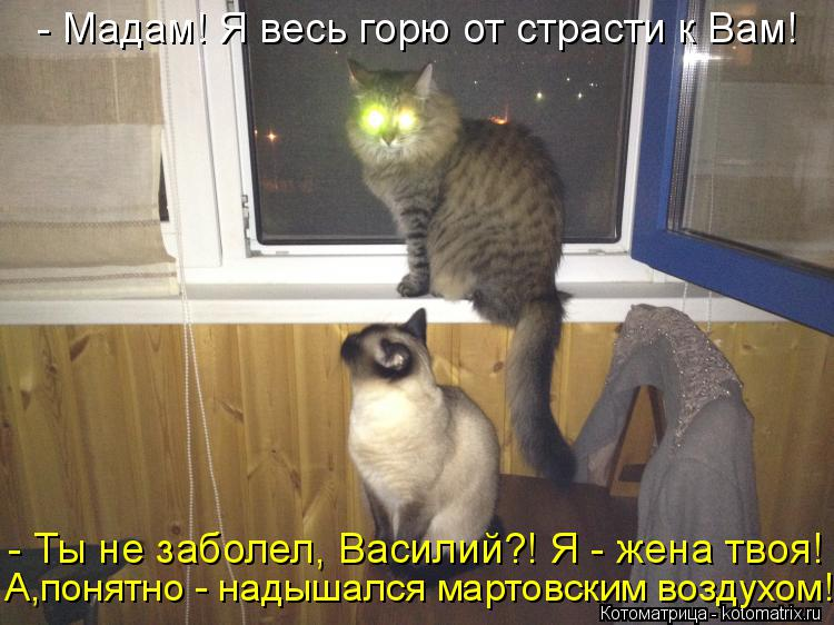 Котоматрица: - Мадам! Я весь горю от страсти к Вам! - Ты не заболел, Василий?! Я - жена твоя! А,понятно - надышался мартовским воздухом!