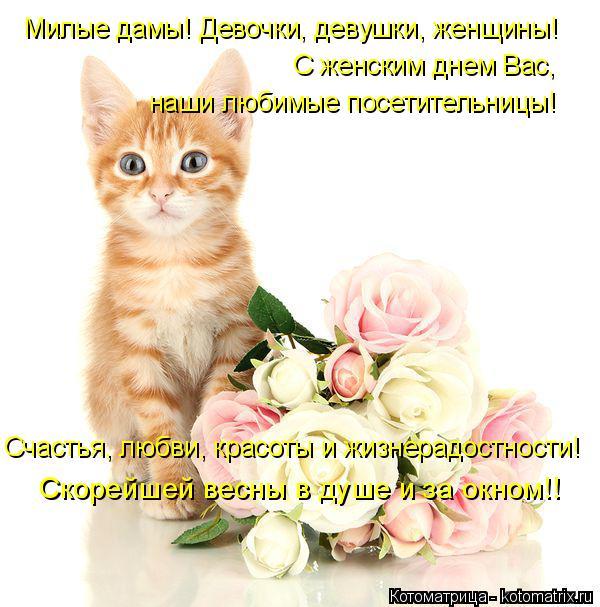 Котоматрица: Милые дамы! Девочки, девушки, женщины! С женским днем Вас,  наши любимые посетительницы! Счастья, любви, красоты и жизнерадостности! Скорейше