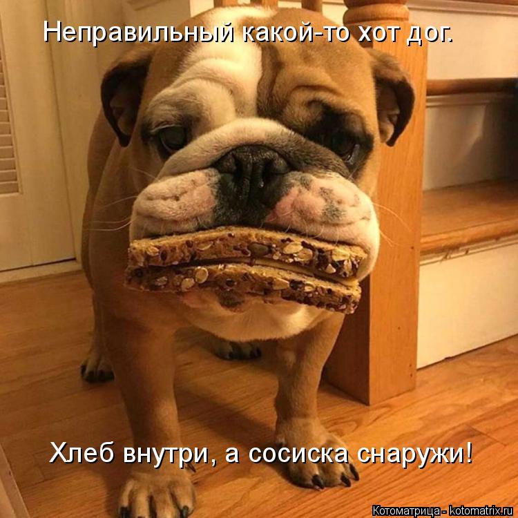 Котоматрица: Неправильный какой-то хот дог. Хлеб внутри, а сосиска снаружи!