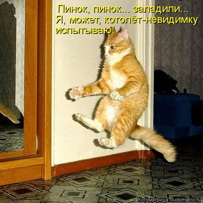 Котоматрица: Пинок, пинок... заладили... Я, может, котолёт-невидимку испытываю!