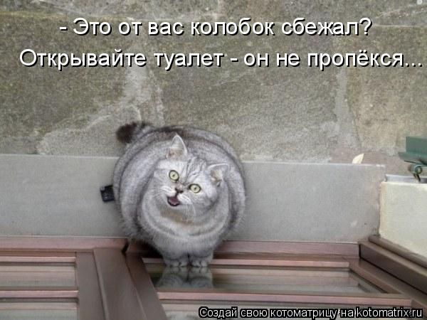 Котоматрица: - Это от вас колобок сбежал? Открывайте туалет - он не пропёкся...