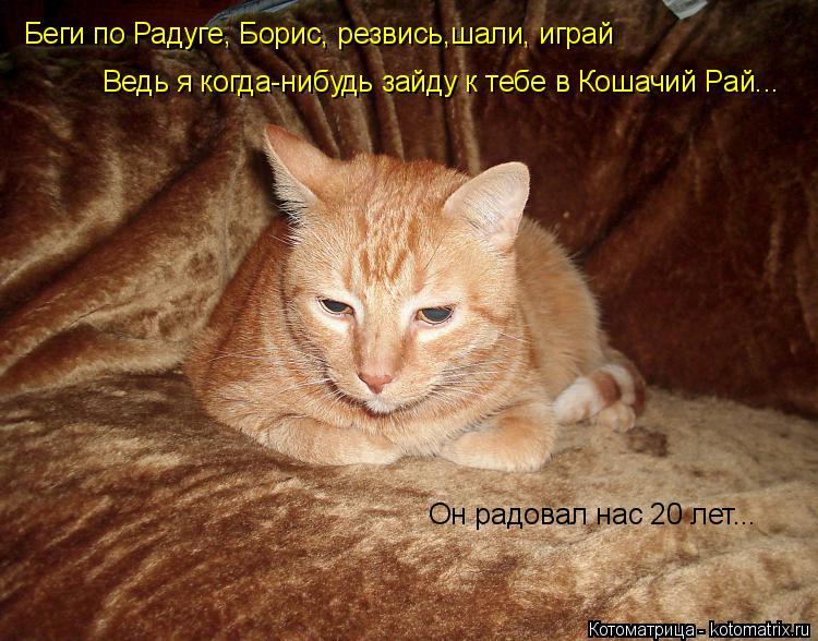 Котоматрица: Беги по Радуге, Борис, резвись,шали, играй Ведь я когда-нибудь зайду к тебе в Кошачий Рай... Он радовал нас 20 лет...