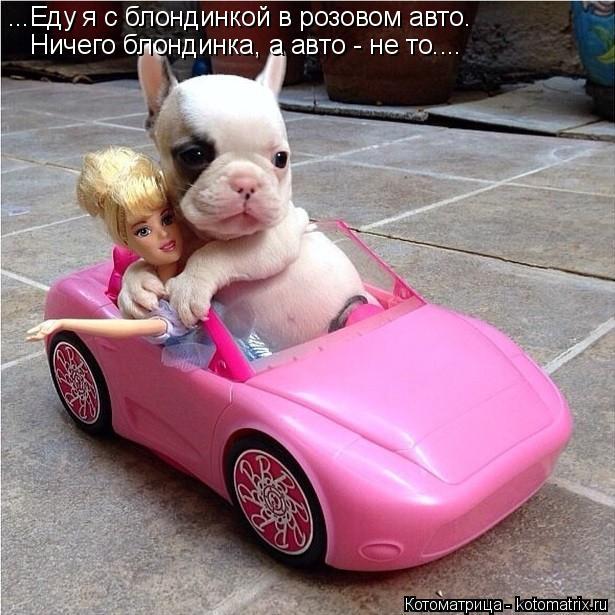 Котоматрица: ...Еду я с блондинкой в розовом авто. Ничего блондинка, а авто - не то....