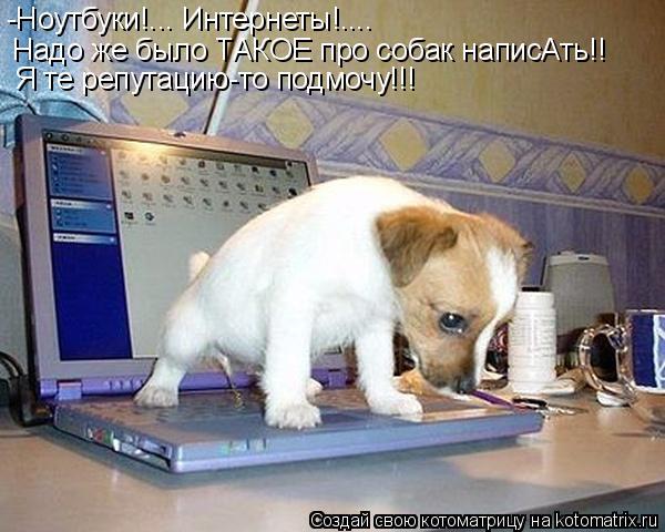 Котоматрица: -Ноутбуки!... Интернеты!.... Надо же было ТАКОЕ про собак написАть!! Я те репутацию-то подмочу!!!