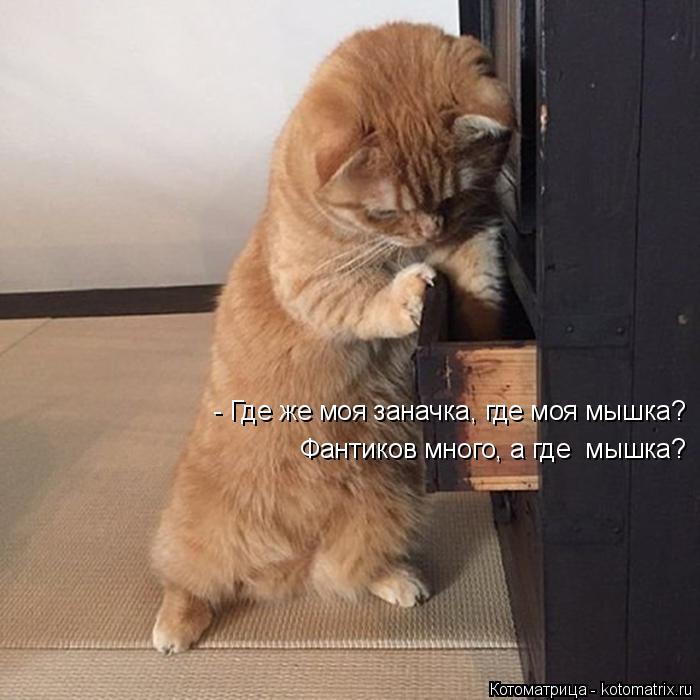 Котоматрица: - Где же моя заначка, где моя мышка? Фантиков много, а где  мышка?