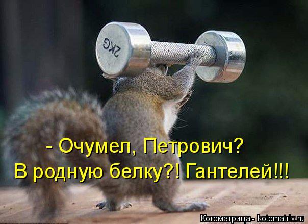 Котоматрица: - Очумел, Петрович? В родную белку?! Гантелей!!!