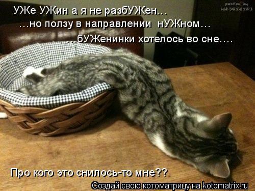 Котоматрица: УЖе УЖин а я не разбУЖен… …но ползу в направлении  нУЖном…  …бУЖенинки хотелось во сне….  Про кого это снилось-то мне??