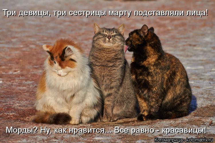 Котоматрица: Три девицы, три сестрицы марту подставляли лица! Морды? Ну, как нравится... Все равно - красавицы!