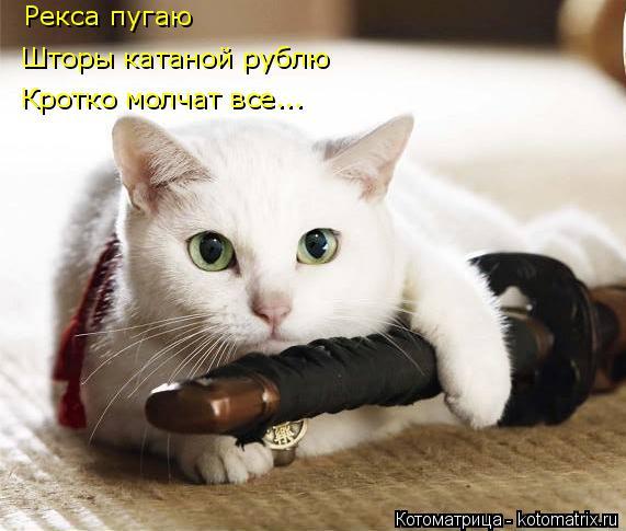 Котоматрица: Рекса пугаю Шторы катаной рублю Кротко молчат все...