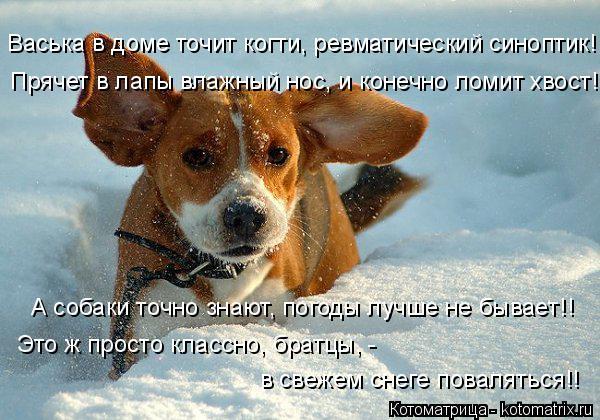 Котоматрица: Васька в доме точит когти, ревматический синоптик! Прячет в лапы влажный нос, и конечно ломит хвост! А собаки точно знают, погоды лучше не бы