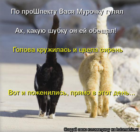Котоматрица: По проШпекту Вася Мурочку гулял  Ах, какую шубку он ей обещал!  Голова кружилась и цвела сирень Вот и поженились, прямо в этот день...