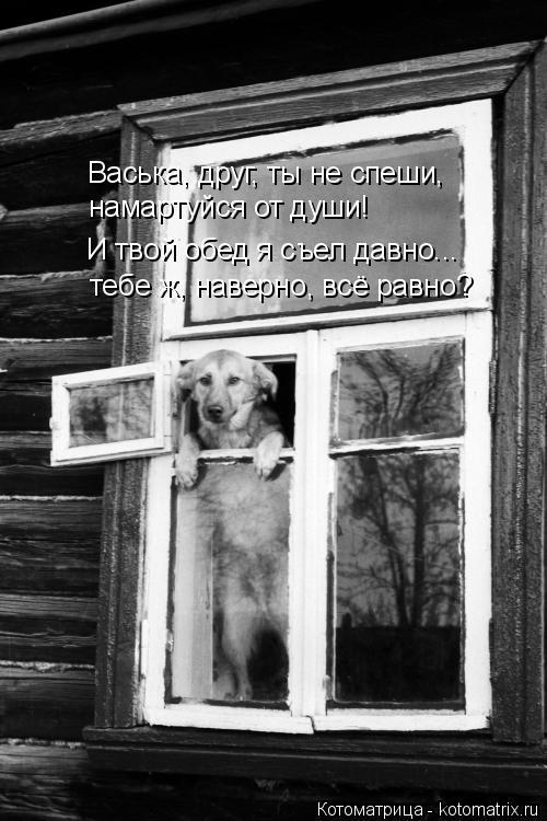 Котоматрица: Васька, друг, ты не спеши,  намартуйся от души! И твой обед я съел давно... тебе ж, наверно, всё равно?