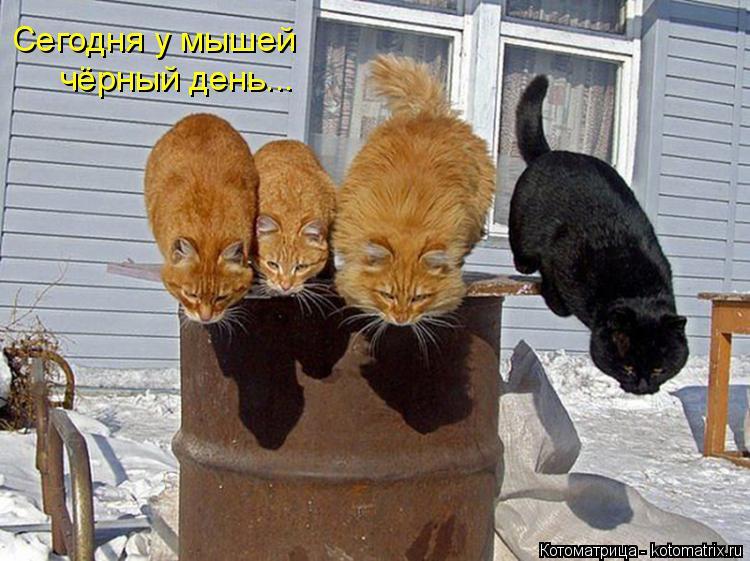 Котоматрица: Сегодня у мышей чёрный день...