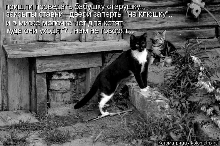 """Котоматрица: пришли проведать бабушку-старушку... закрыты ставни.. двери заперты """"на клюшку"""".. и в миске молочка нет для котят, куда они уходят?.. нам не гово"""