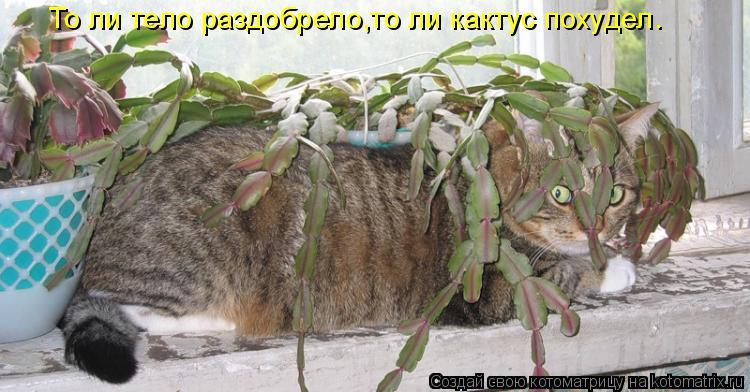 Котоматрица: То ли тело раздобрело,то ли кактус похудел.