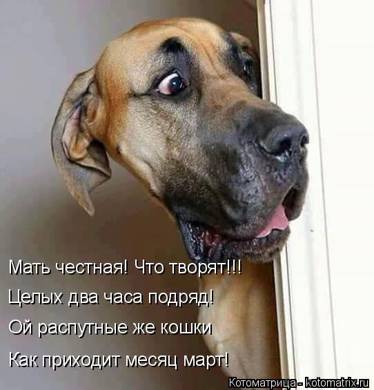 Котоматрица: Мать честная! Что творят!!! Целых два часа подряд! Ой распутные же кошки Как приходит месяц март!