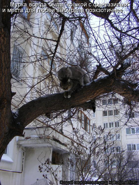 """Котоматрица: ... Мурка всегда была """"кошкой с фантазиями"""" и места для любви выбирала поэкзотичнее."""